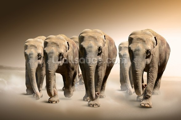 Herd of Elephants wall mural
