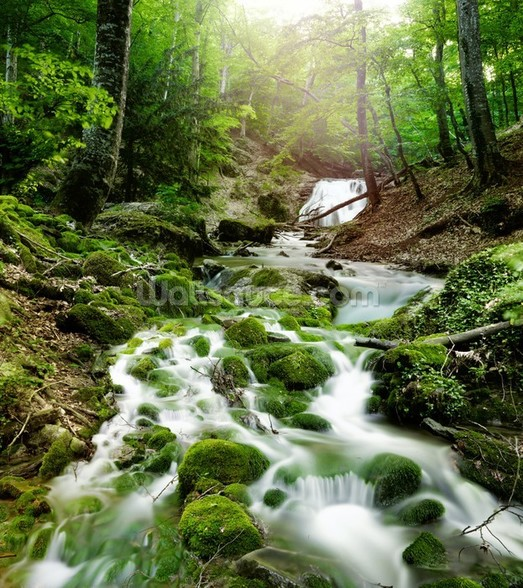 Foggy Forest Waterfall wall mural
