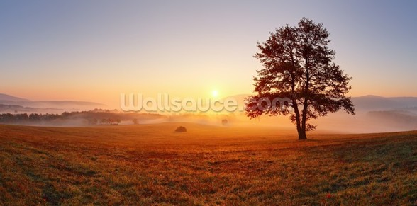 Meadow Sunset wall mural