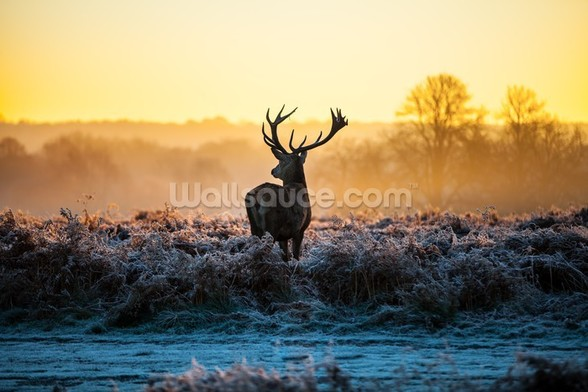 Red Deer Sunrise wall mural