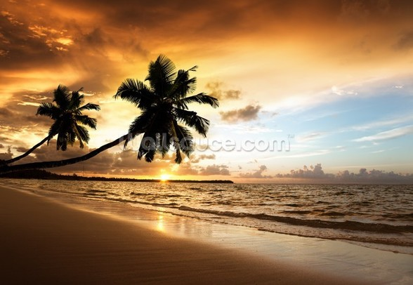 Palm Sunset mural wallpaper