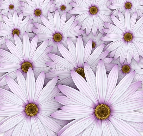 Field of Purple Daisies wall mural