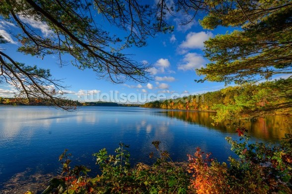 Forest Lake in Autumn wall mural