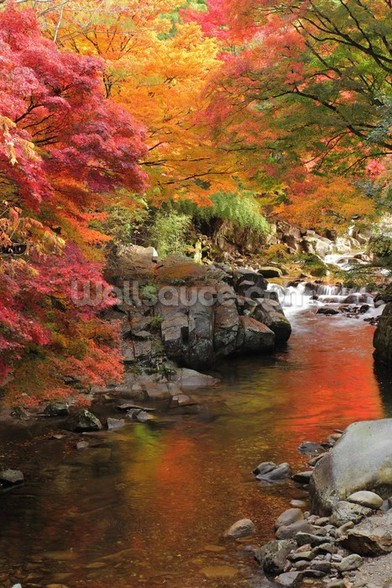 Autumn Colours, Japan mural wallpaper