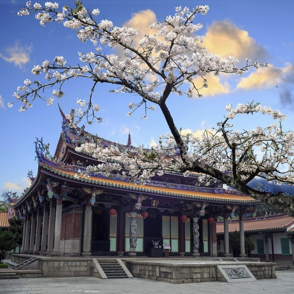 Sakura Temple mural wallpaper