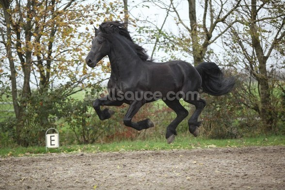Flying Black Stallion wall mural