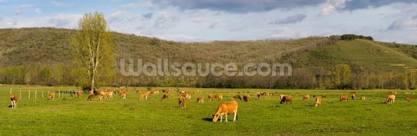 Brown Cows, Panoramic mural wallpaper