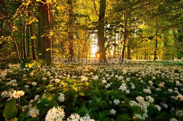 Beautiful Sunlit Forest Floor wall mural