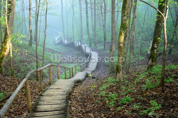 Foggy Forest Stairway mural wallpaper