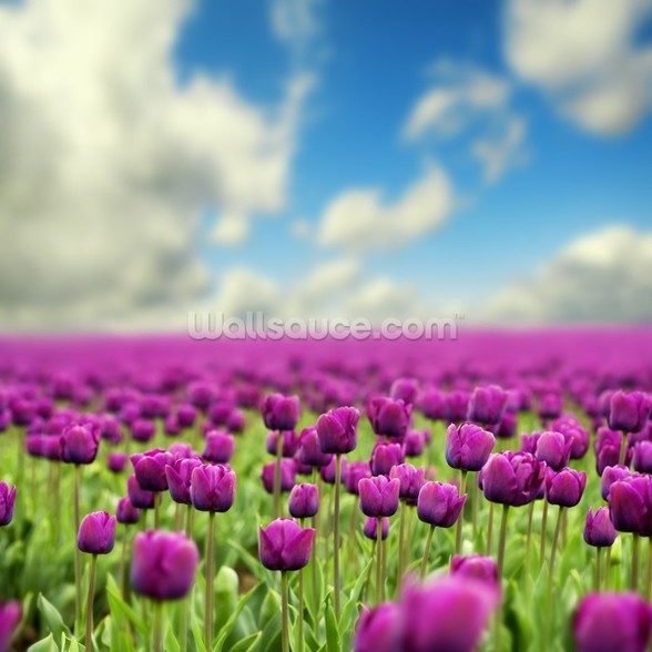 Spring Tulips wallpaper mural
