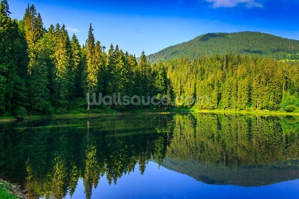 Nature's Green and Blue mural wallpaper