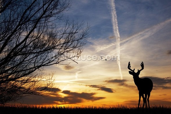Deer at Sunset wall mural