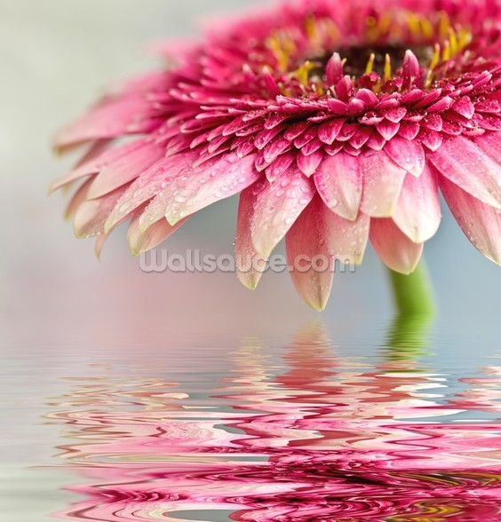 Pink Flower Blossom mural wallpaper
