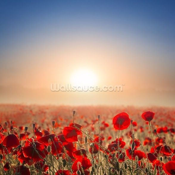 Red Poppy Fields mural wallpaper