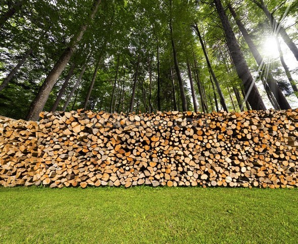 Pile of Chopped Firewood in the Woods wall mural