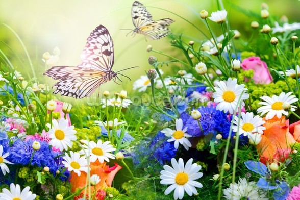 Butterflies and Flowers mural wallpaper