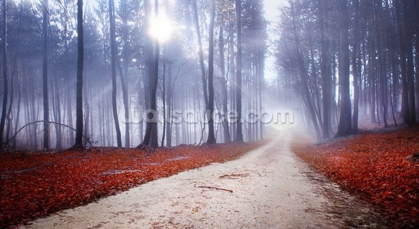 Mystical Forest Road wall mural