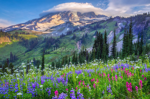 Mt Rainier Wildflowers mural wallpaper