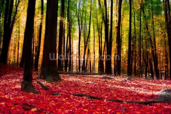 Colourful Autumn Forest wall mural