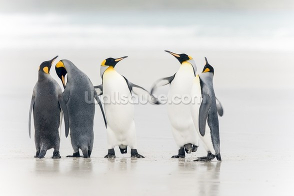 King Penguins wall mural