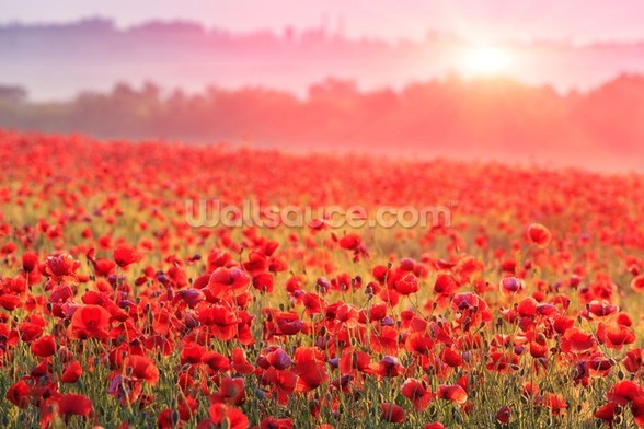Red Poppy Sunrise wallpaper mural