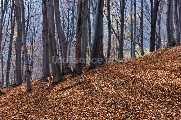 Homolje Mountains Autumn Woodland wall mural