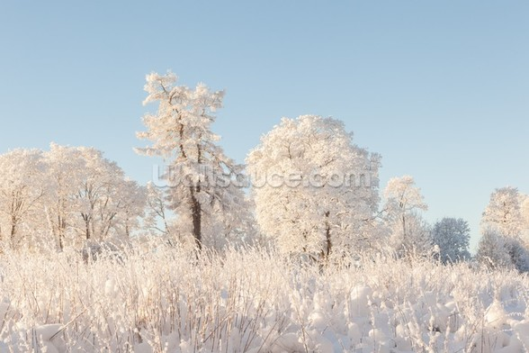 Snowy Trees Field wallpaper mural
