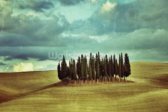 Cypress Trees on Tuscan Landscape wall mural