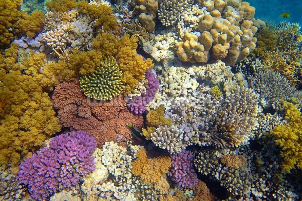Coral Reef Garden wallpaper mural