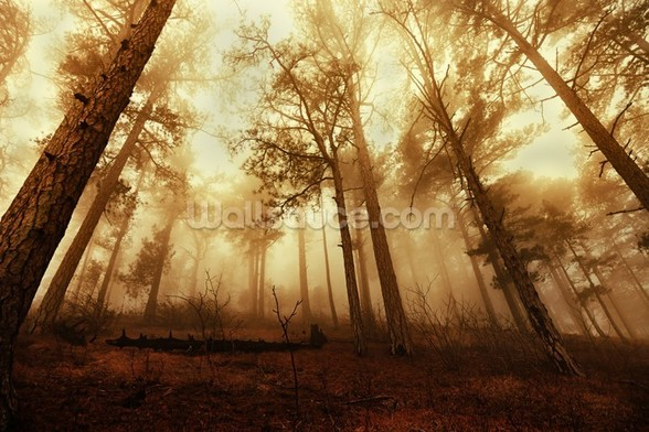 Pine Forest in the Mist mural wallpaper