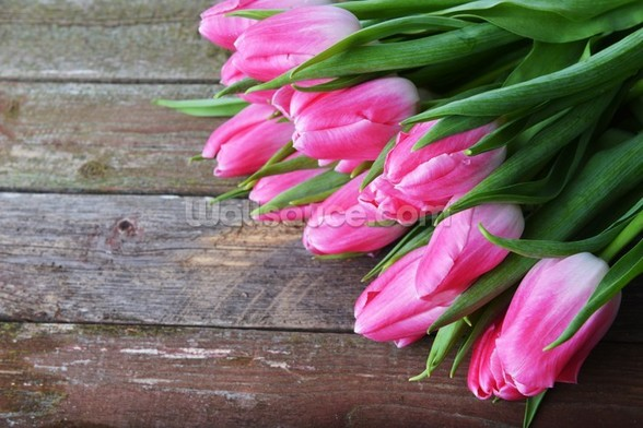 Pink Tulips Vertical mural wallpaper