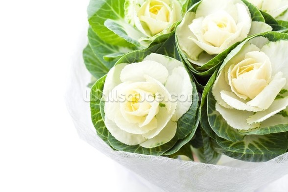 Cabbage Flowers mural wallpaper
