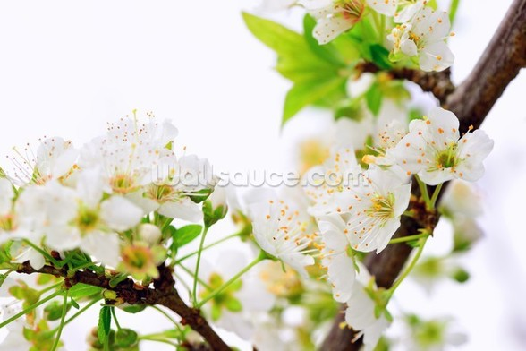 Plum Tree Flower wallpaper mural