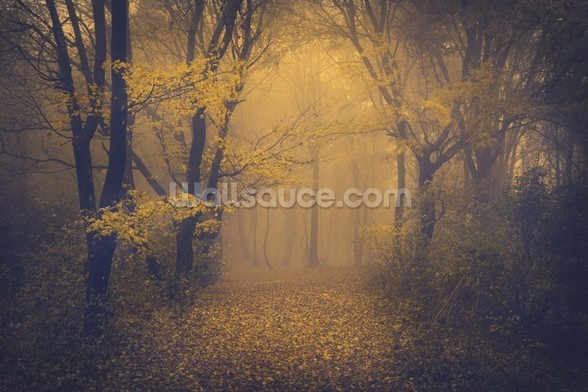 Mysterious Foggy Forest mural wallpaper