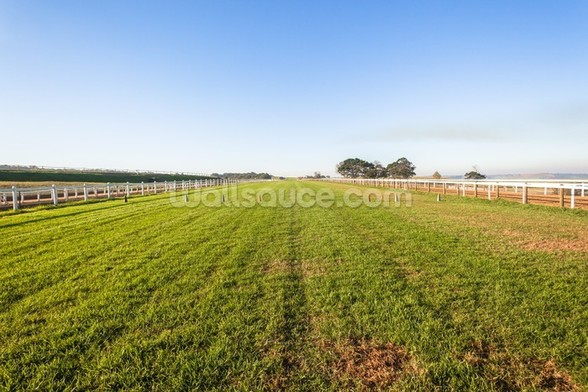 Horse Racing Training Track wall mural