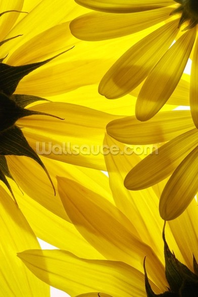 Yellow Flowers wallpaper mural
