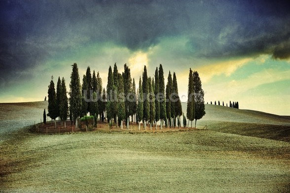 Atmospheric Tuscany wall mural