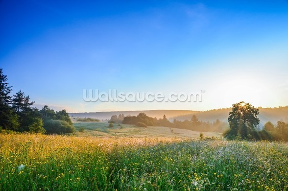 Misty Summer Sunrise mural wallpaper
