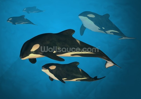 Orca Family wallpaper mural