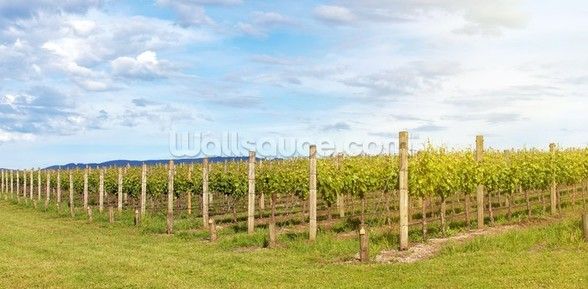 Yarra Valley Vineyards wallpaper mural