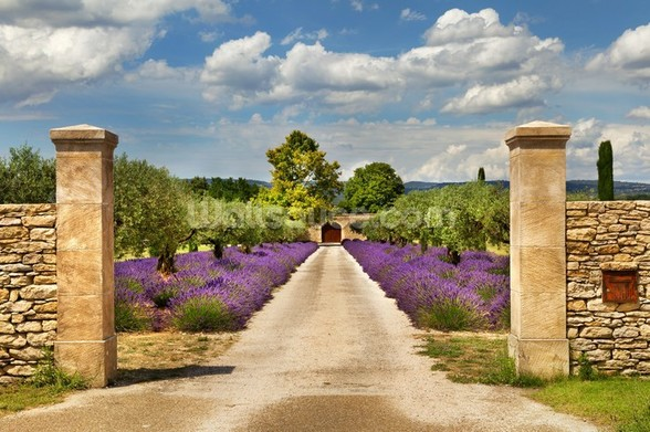 Provence - Lavender Pathway wallpaper mural
