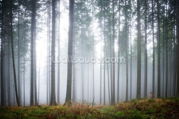 Morning Forest Mist mural wallpaper