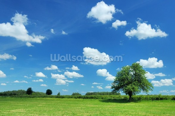 Summer Landscape mural wallpaper
