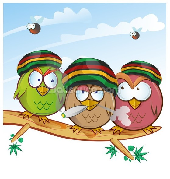 Jamaican Owls Angry Birds Style wall mural