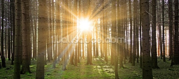 Sun in the Forest wall mural