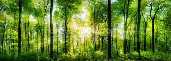 Forest Panoramic with Sunbeams wallpaper mural