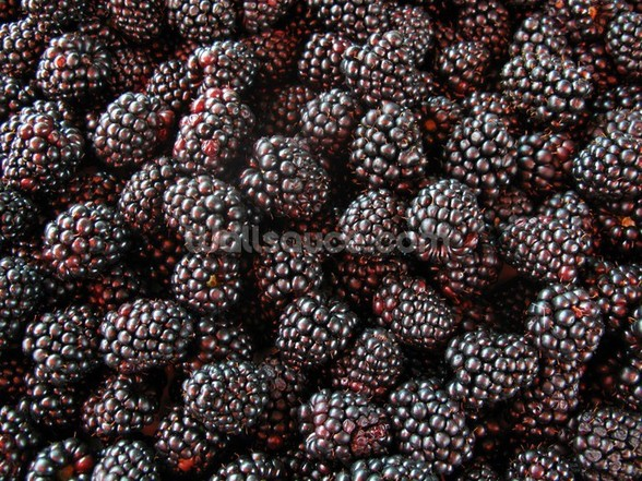 Blackberries mural wallpaper