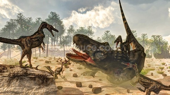 Tarbosaurus Attacked by Velociraptor Dinosaurs mural wallpaper