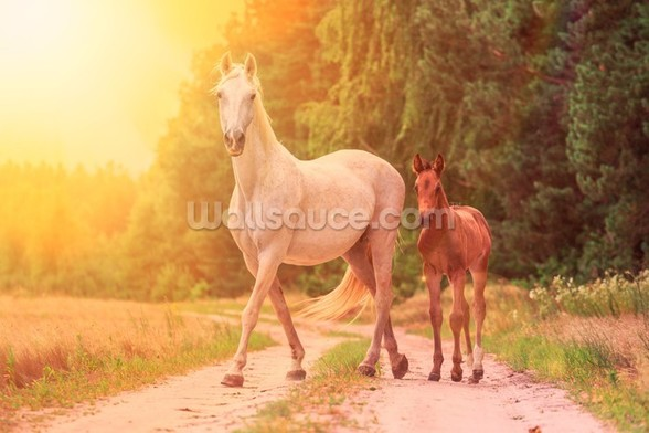 Sunlit Mare and foal wall mural