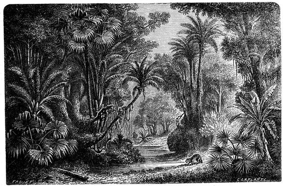 Antique Illustration of Indian Jungle wall mural